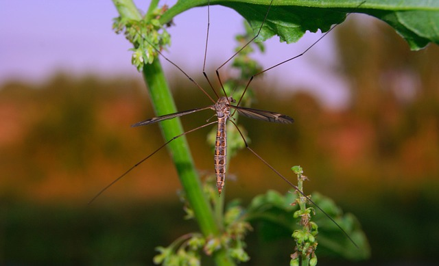 parafina insecticida antimosquitos